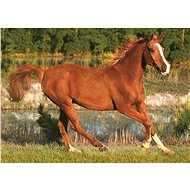 Hit the Puzzle Beauty of Gallop 500 pieces - Puzzle